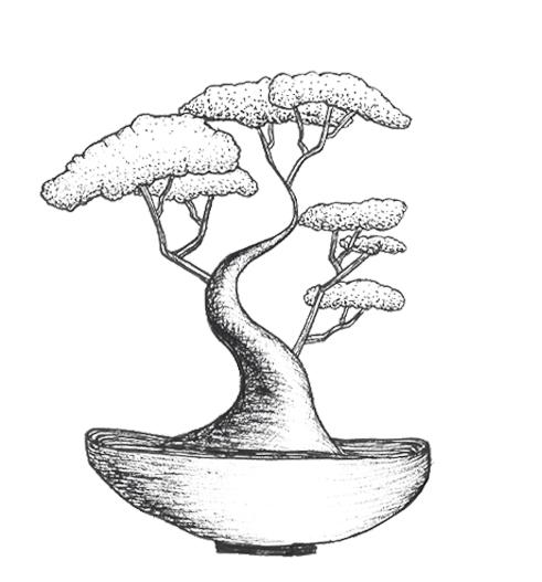 bowl bonsai.jpg
