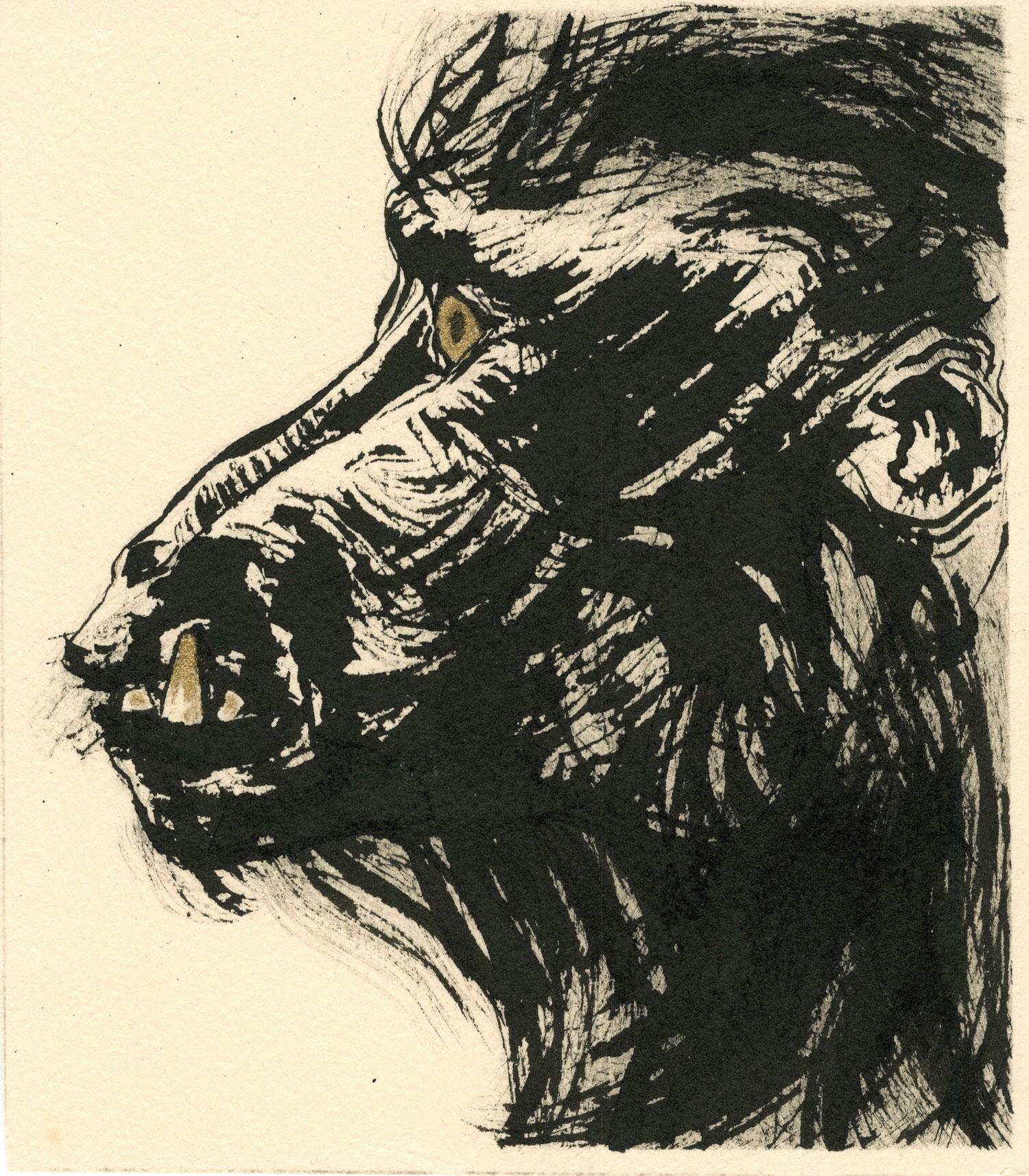 20-heads-baboon_sfw.jpg