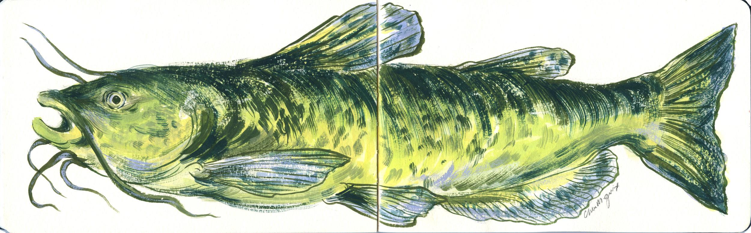sketchbook-fish_july-for-web.jpg
