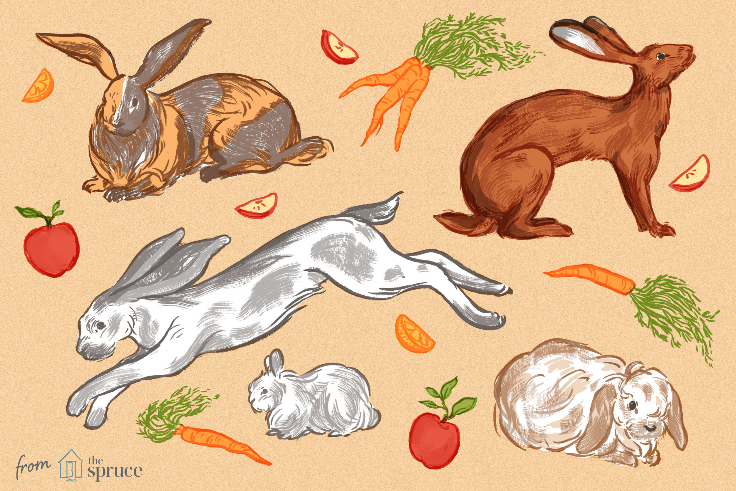 rabbit-breeds-1237186-final-v3.jpg
