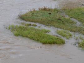 sediment.PNG