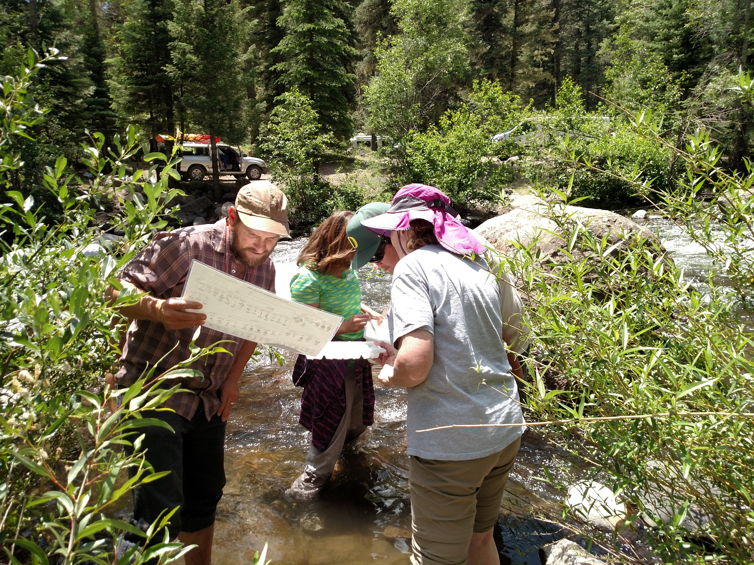 """Here, teachers use an index to identify the macroinvertebrates they find. The knowledge they gained will help them to teach from the associated """"Macroinvertebrate Mania"""" lesson plan."""