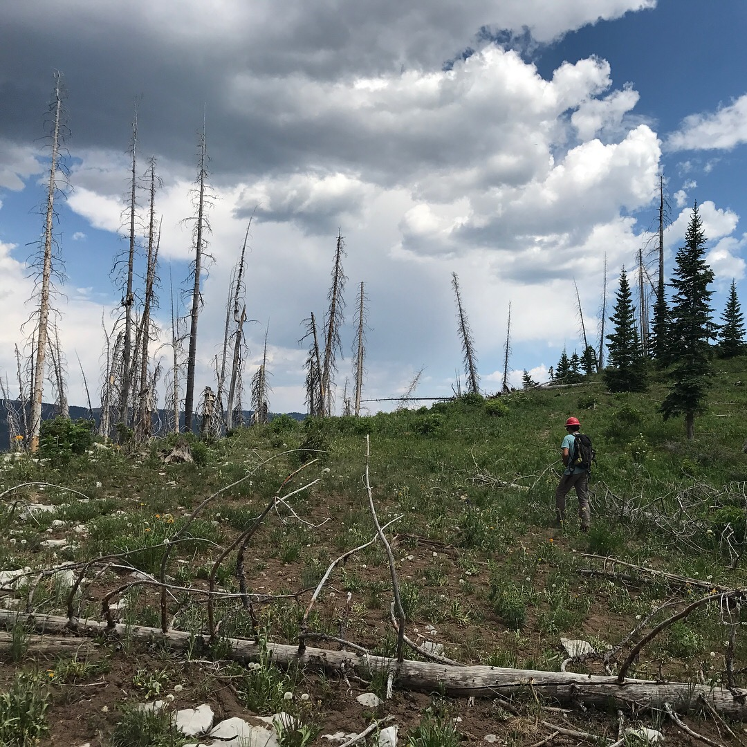 Michael Bartley walks through the Missionary Ridge burn scar on his way to another reforestation plot.