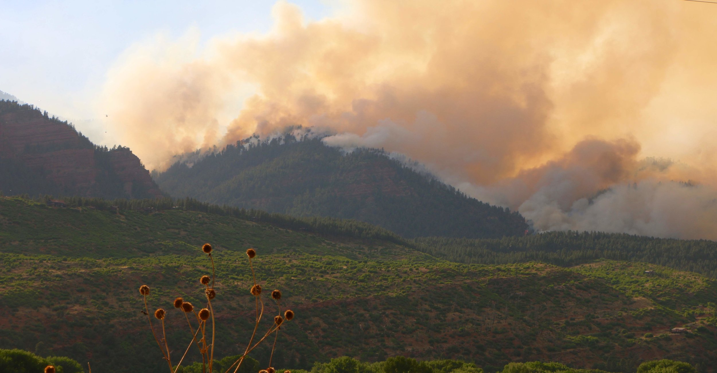 The 416 Fire burns behind an area that burned during the Missionary Ridge Fire, but has begun to regenerate. Photo by Priscilla Sherman.