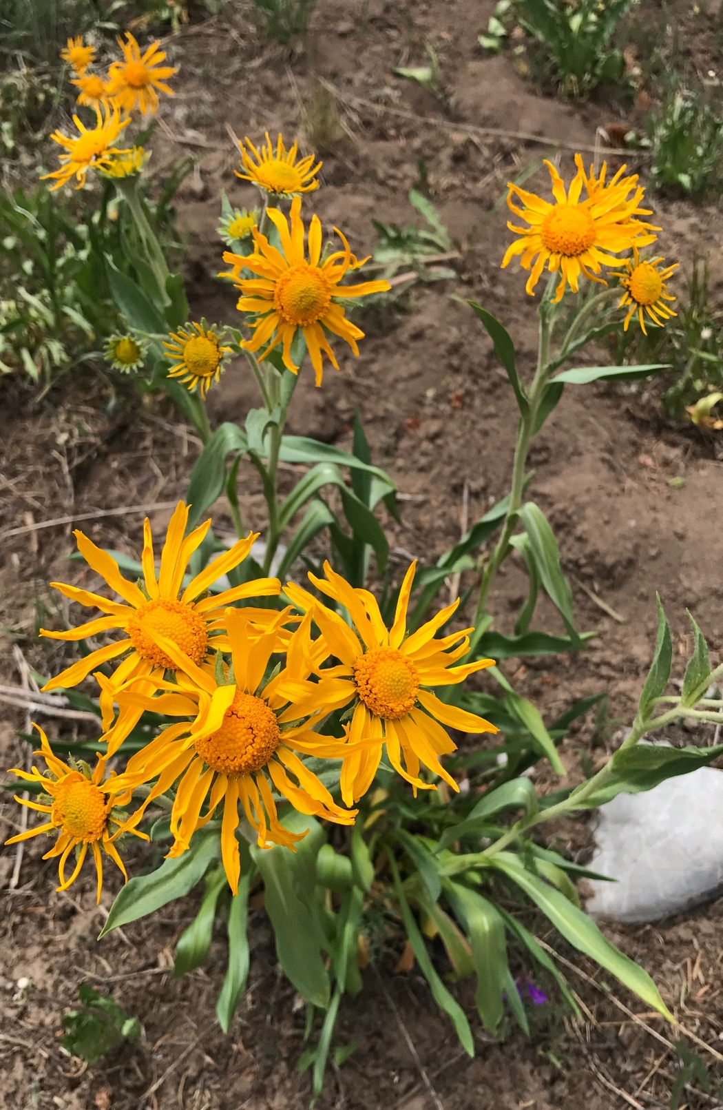 Wildflowers blooming on the Missionary Ridge burn scar. Photo by: Laurel Sebastian