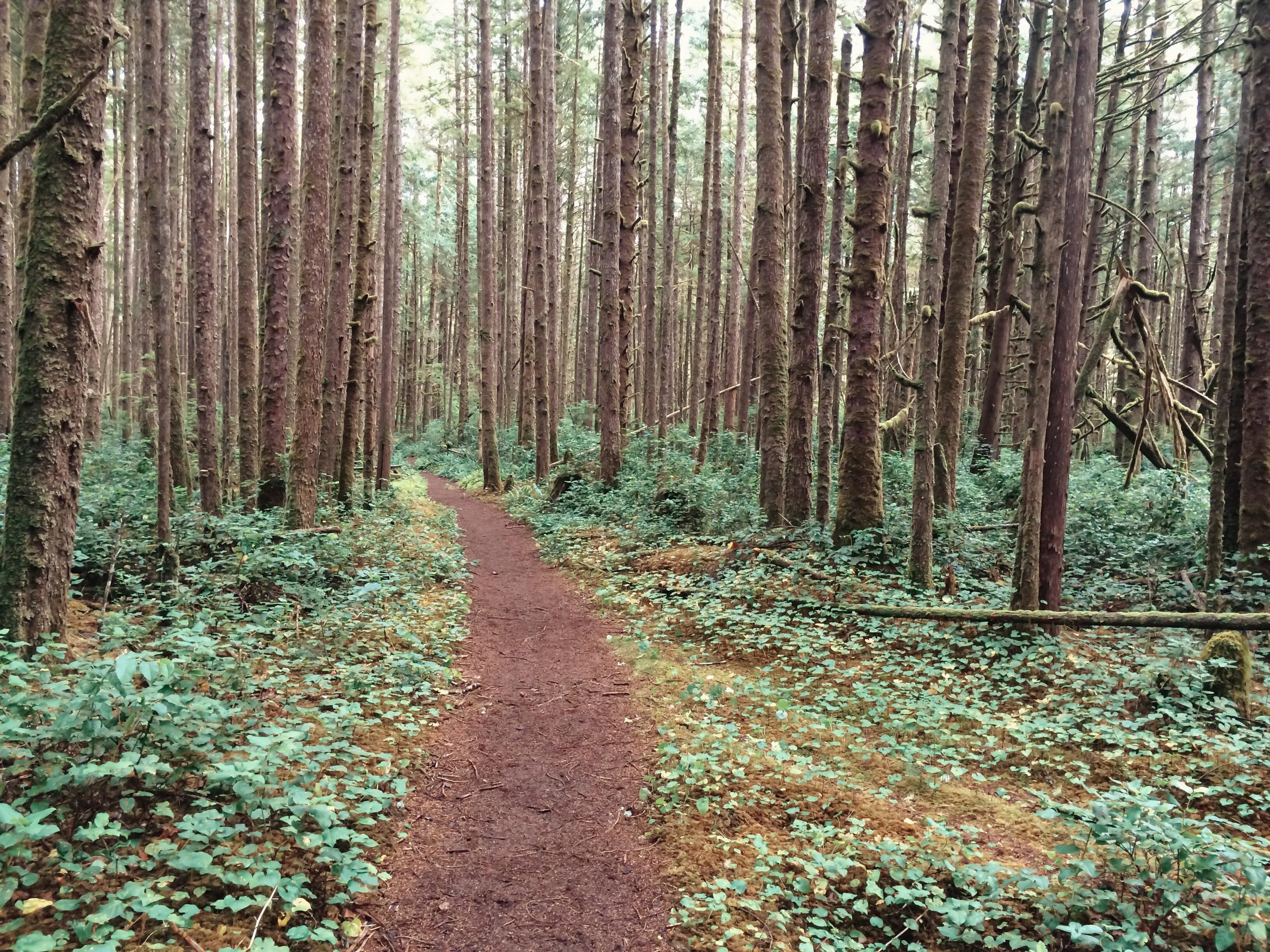 West Coast Trail (22 of 30).jpg