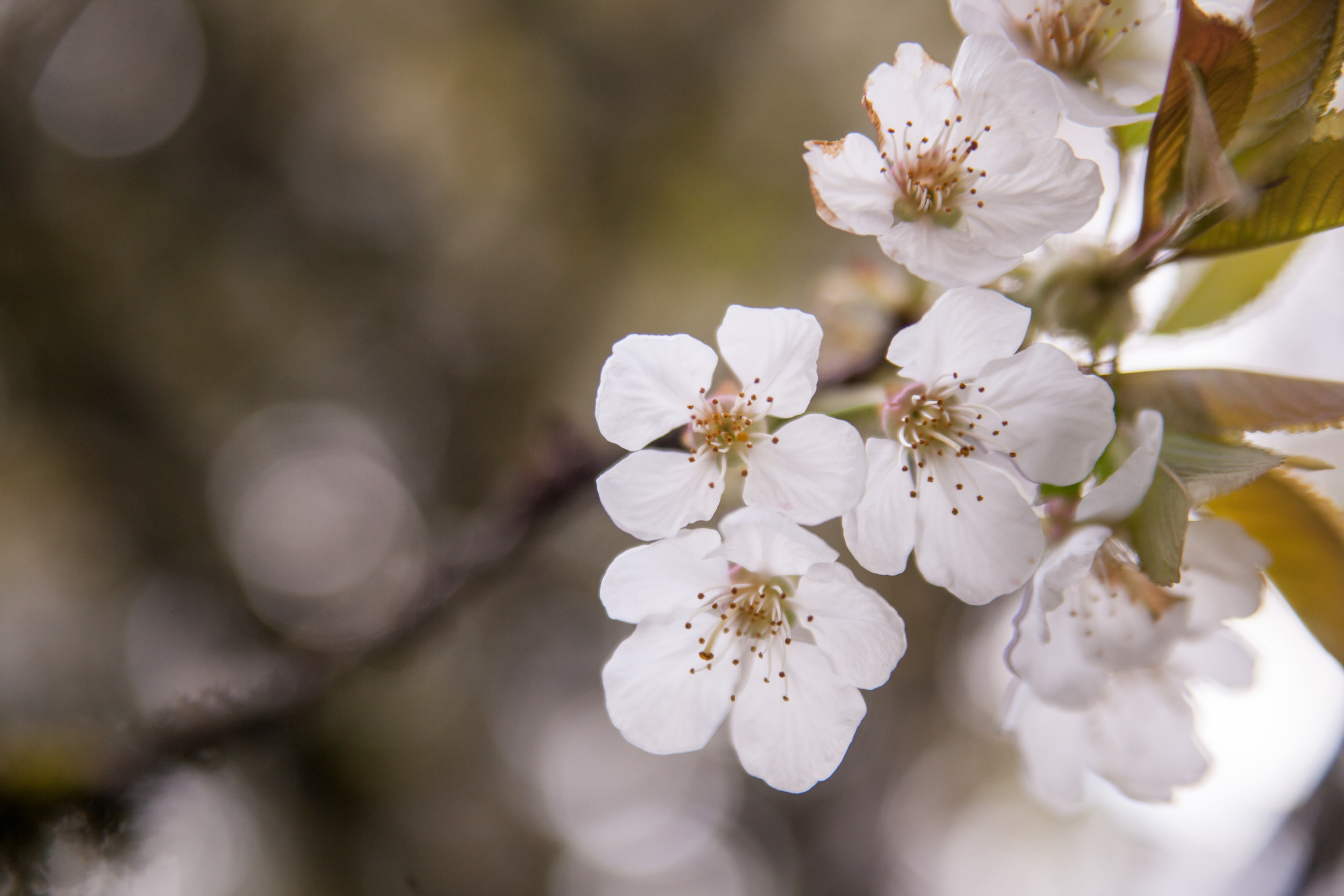 Flowers (3 of 11).jpg