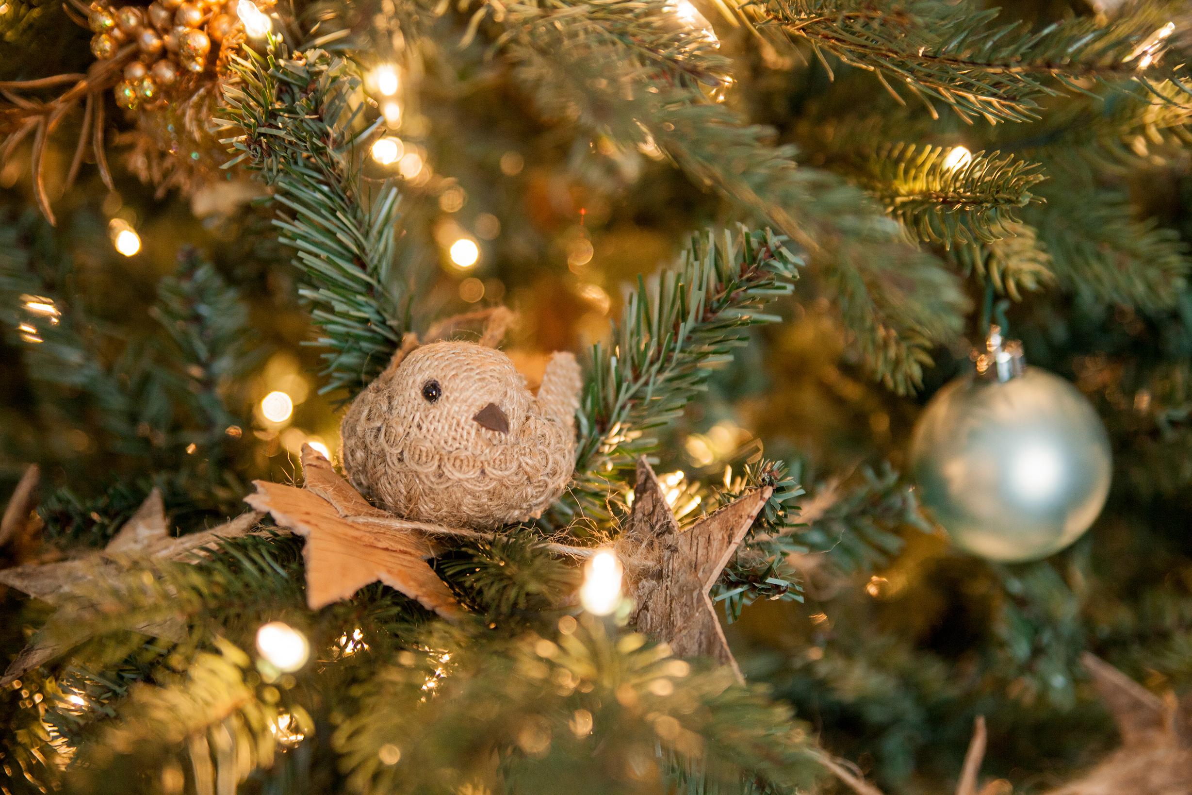 Oh Christmas Tree WT (2 of 95).jpg