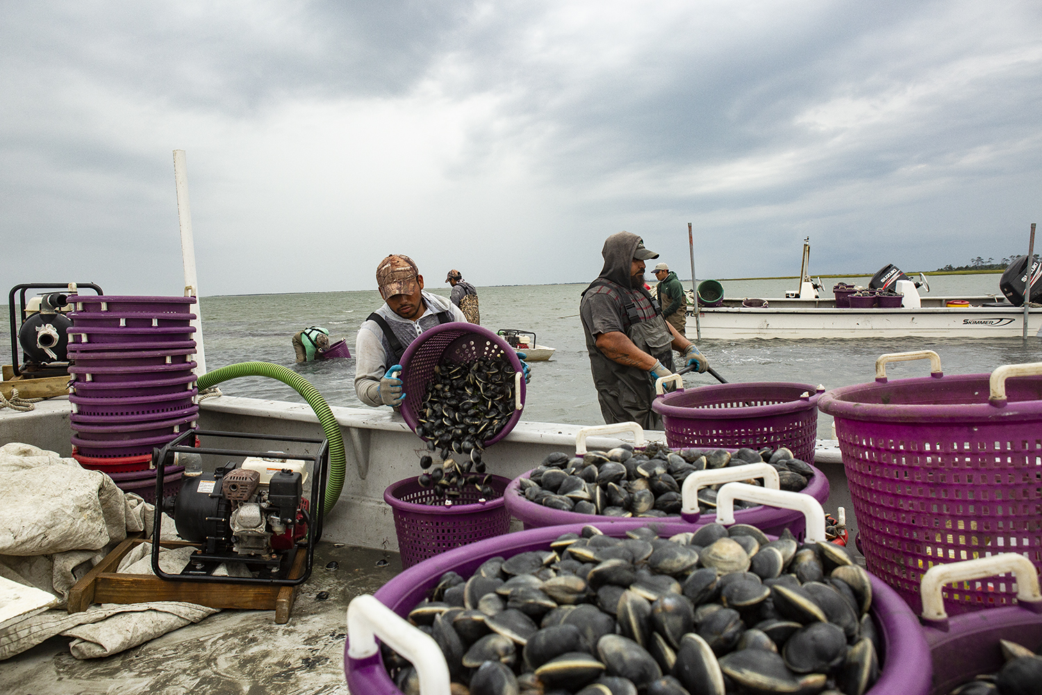 H.M. Terry Co.-Clams & Oysters, Willis Wharf, Virginia
