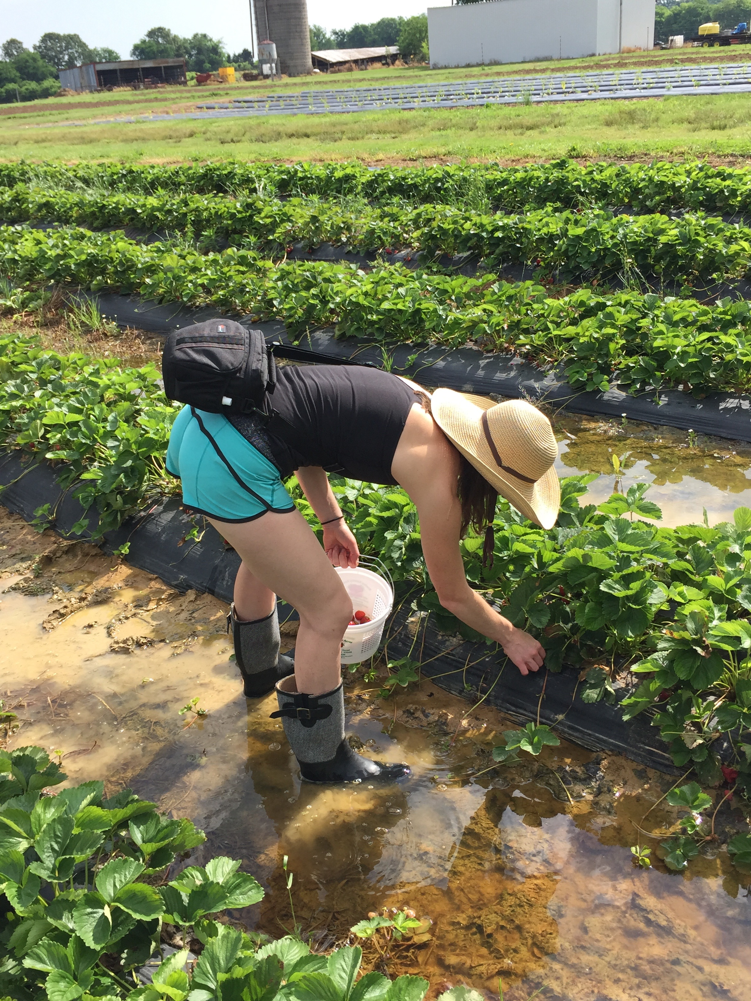 All of It - Strawberry picking in Tennessee!
