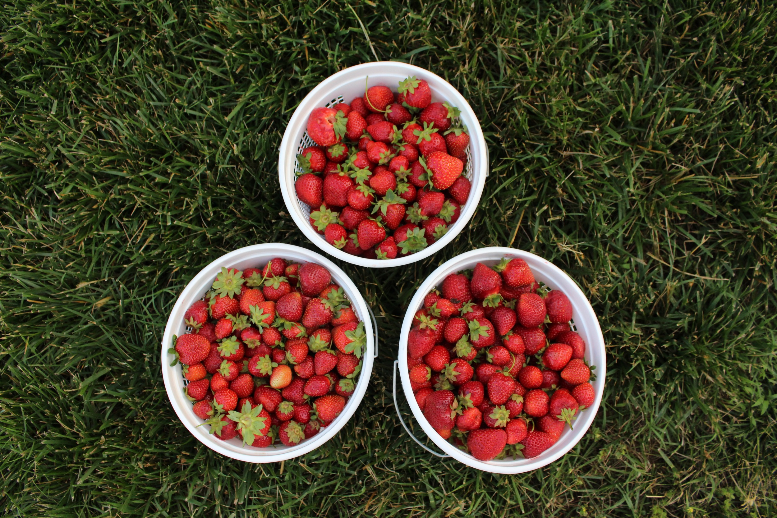 All of It - BUCKETS OF HAND PICKED STRAWBS