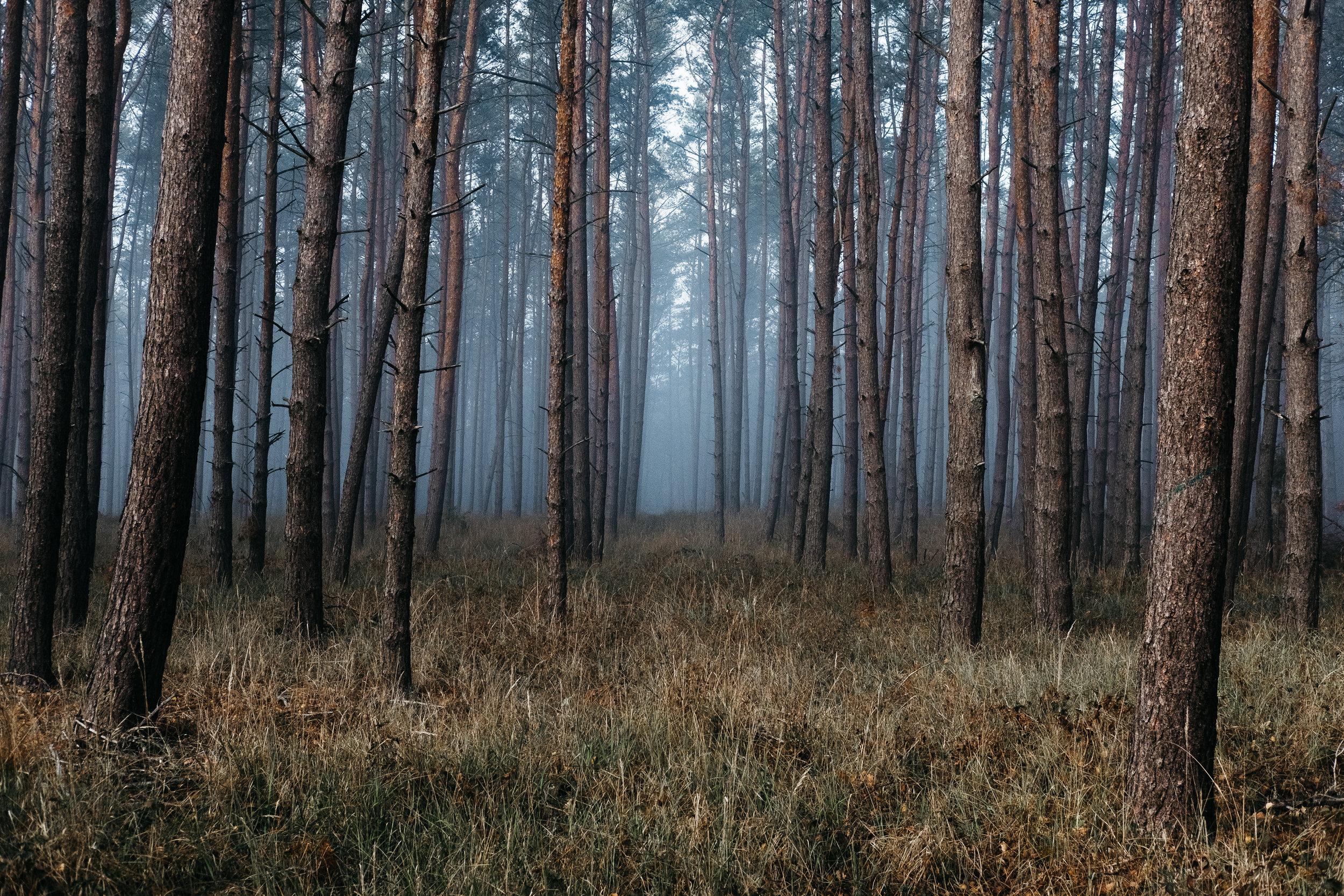 I Go Among Trees -