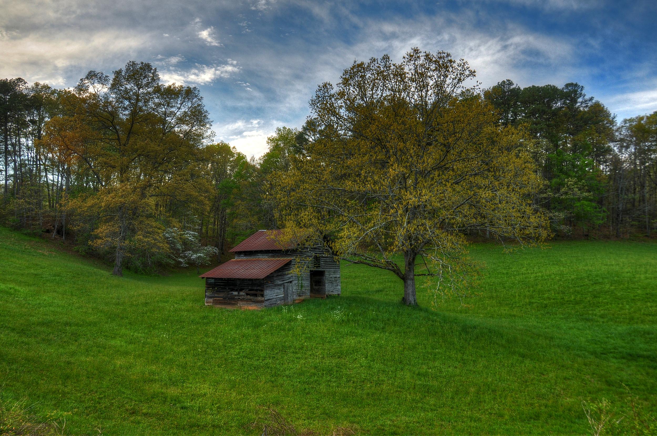 tree barn1.jpg
