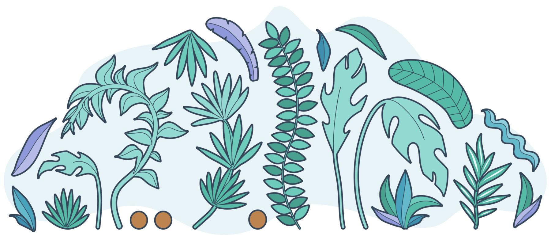 organizeplants.png