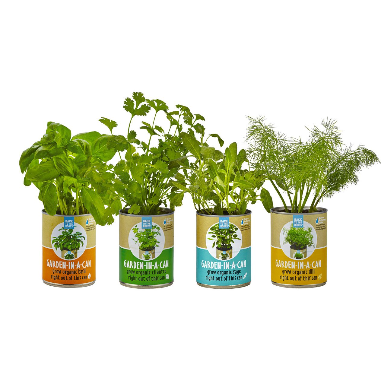 Back to the Roots Garden-in-a-Can Set  (basil, cilantro, dill & sage)