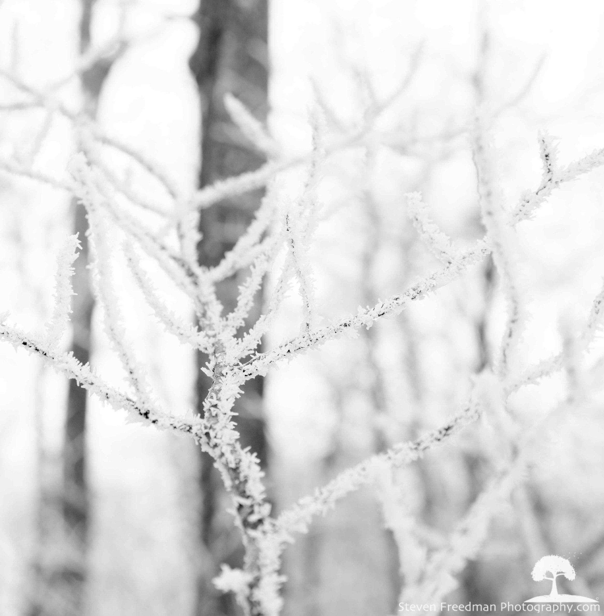 Beautiful Hard Rime Ice.
