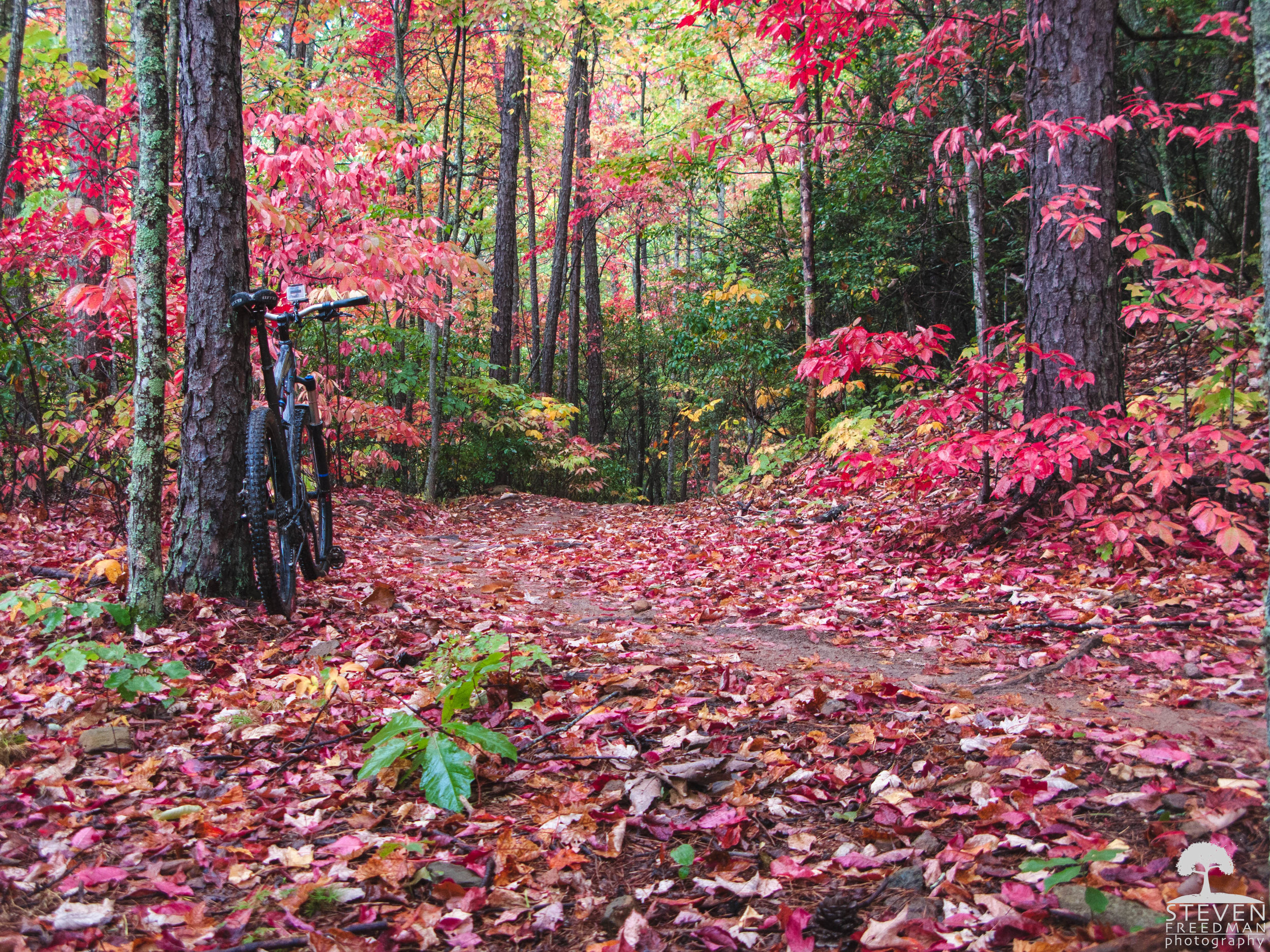 Red Delight in this section of trail that is full of Sourwood trees.