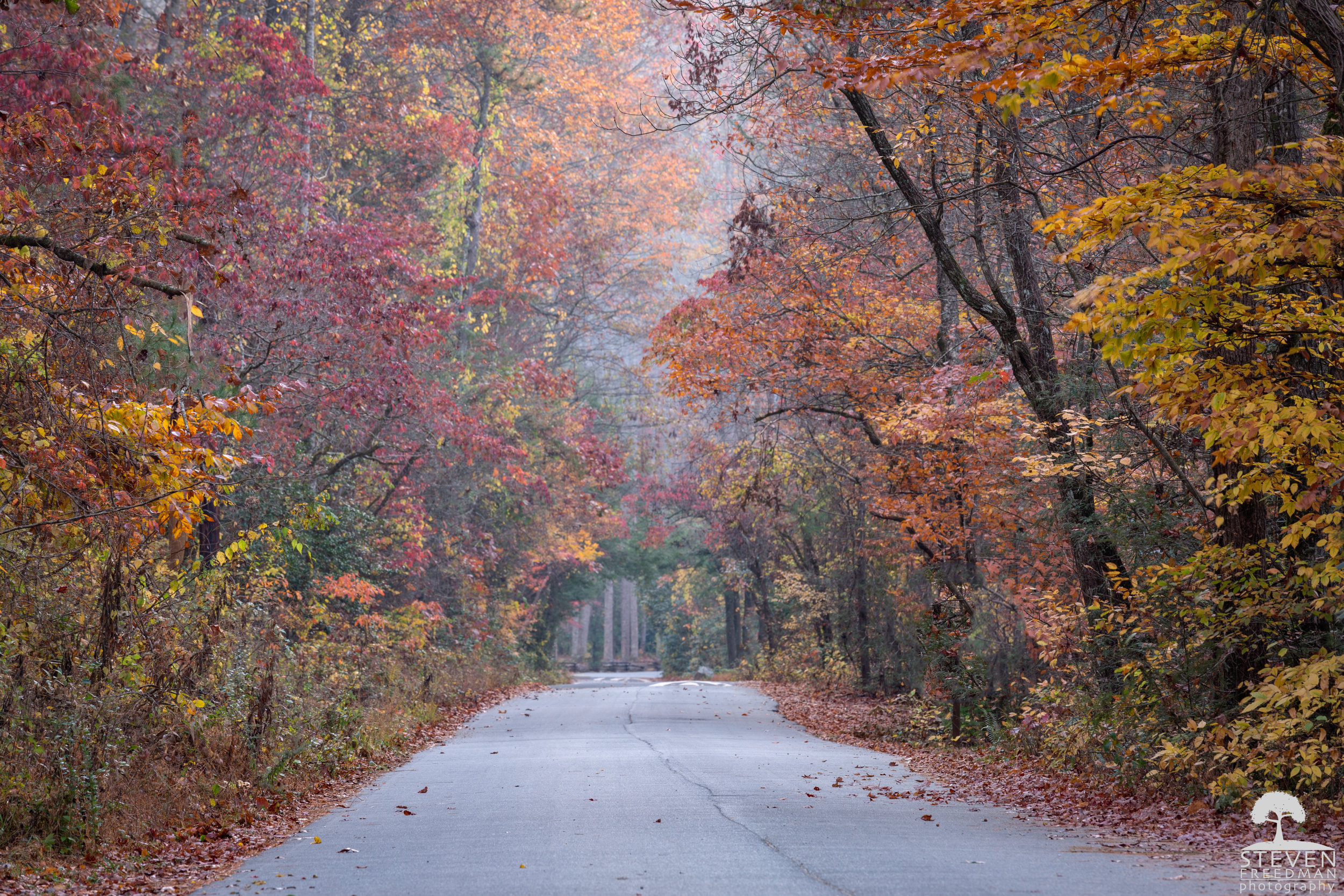 A shot of Forest Road 1206 or Yellow Gap Road in the North Mills River Recreation Area.