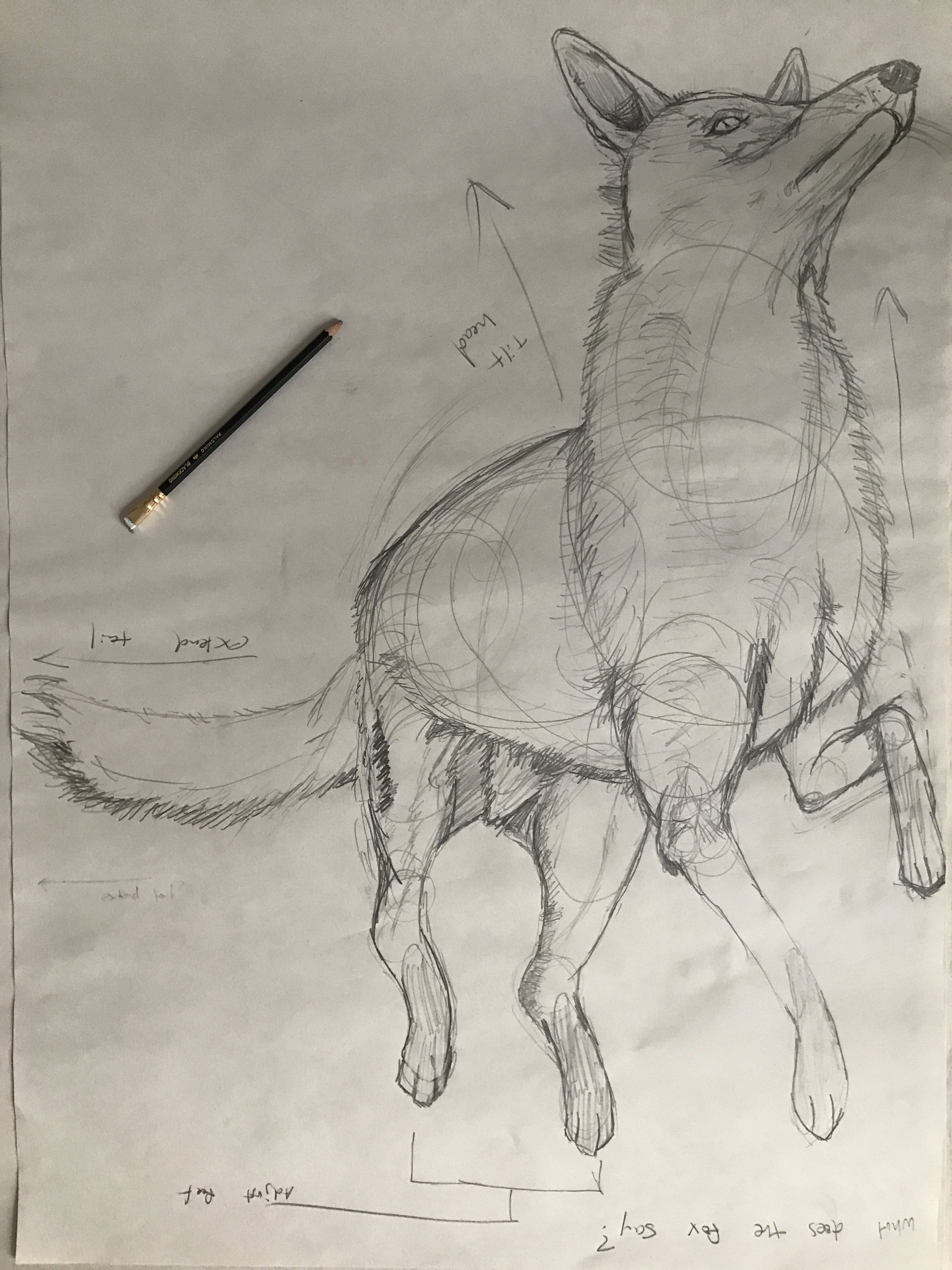 Sketch for a floating/falling animal and polomino blackwing pencil.