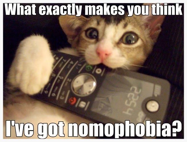 Nomophobia_cat.jpg