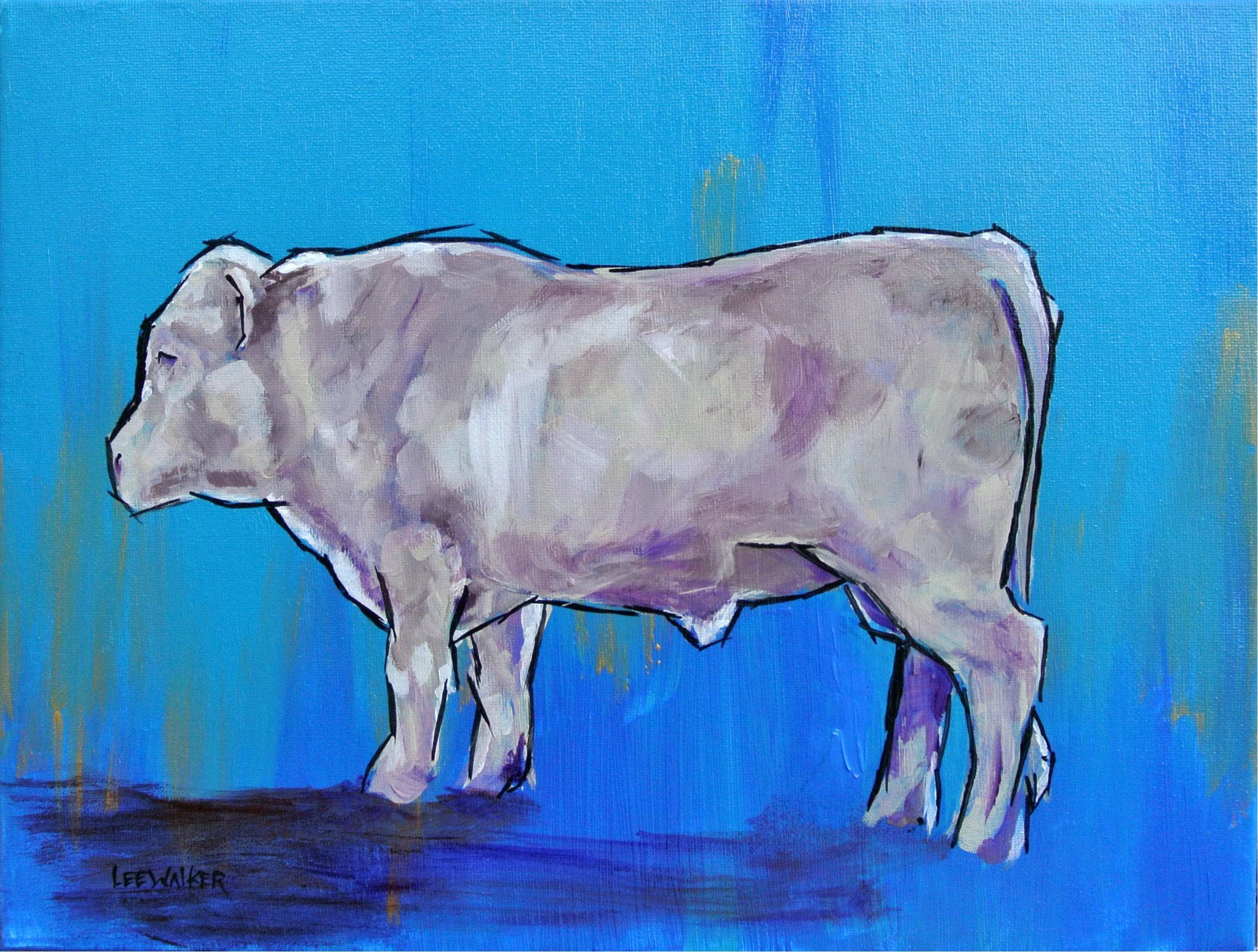 "Charolais Bull 11x14"""