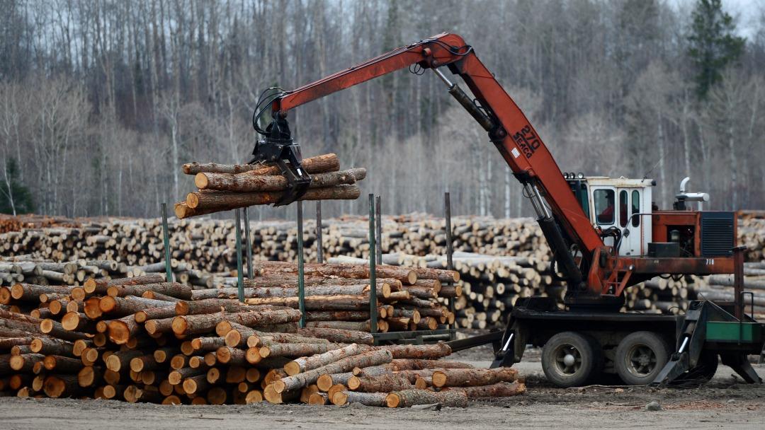 Logs being unloaded at Murray Brothers Lumber Company woodlot in Madawaska, Ontario. (Sean Kilpatrick/CP)