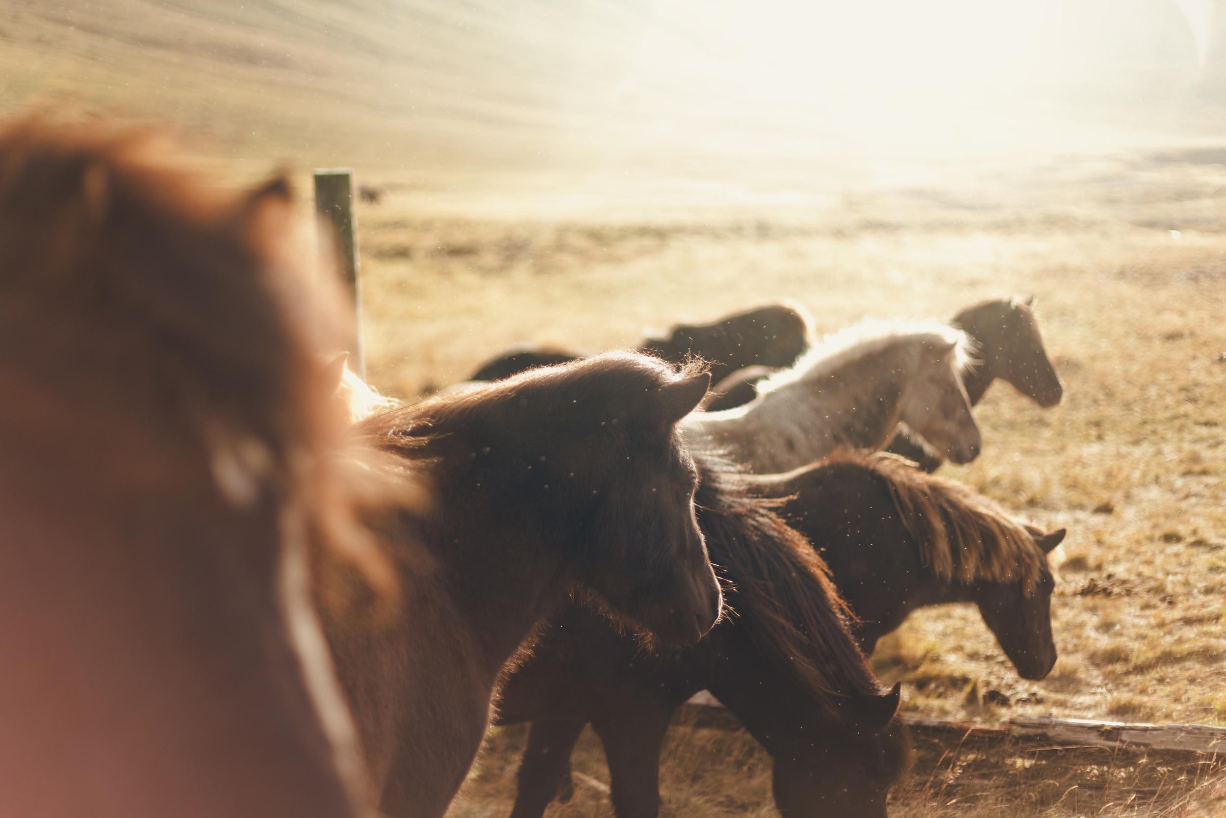 ponies4.jpg