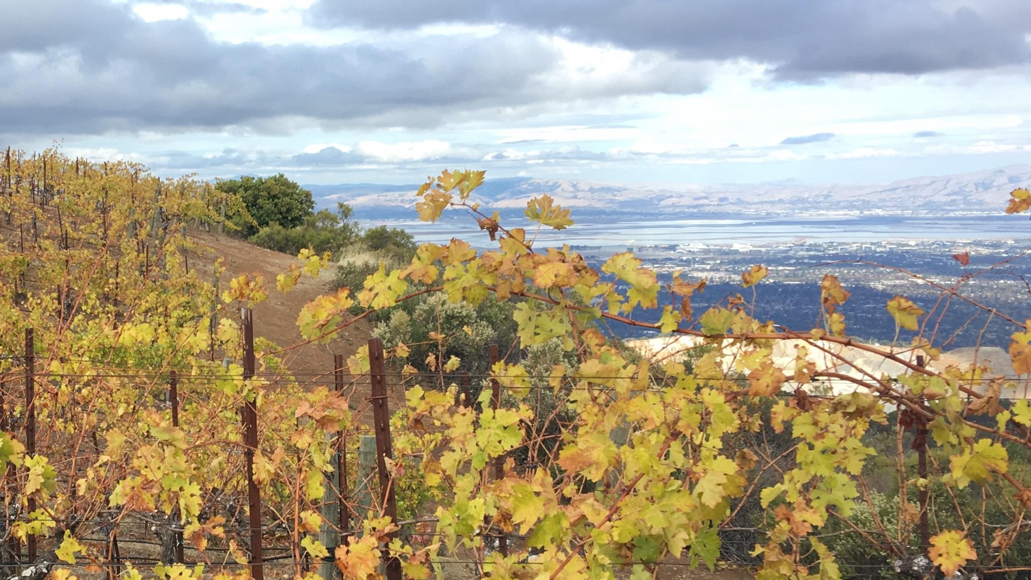 winery autum.jpg