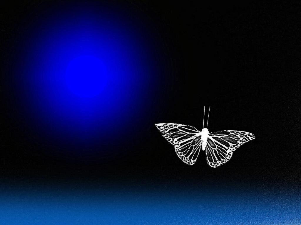 Notte de la luna by Milo Mingo