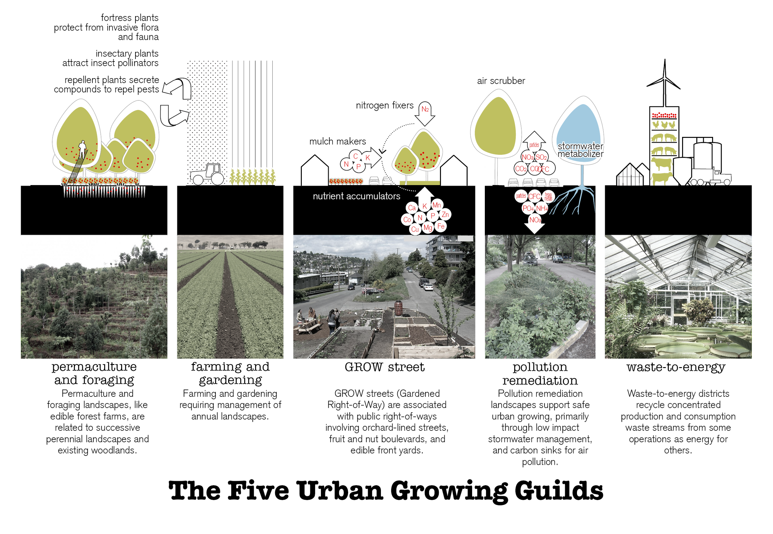 Five Urban Growing Guilds_UPDATE.png