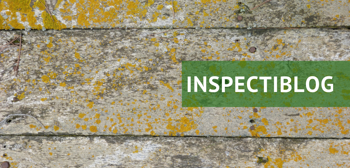 Mold and Indoor Air Quality — The Mold Guy
