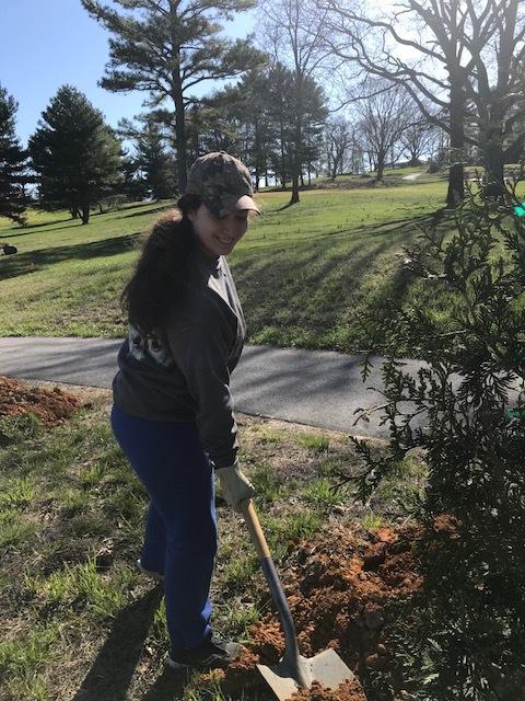 Planting Trees 2018