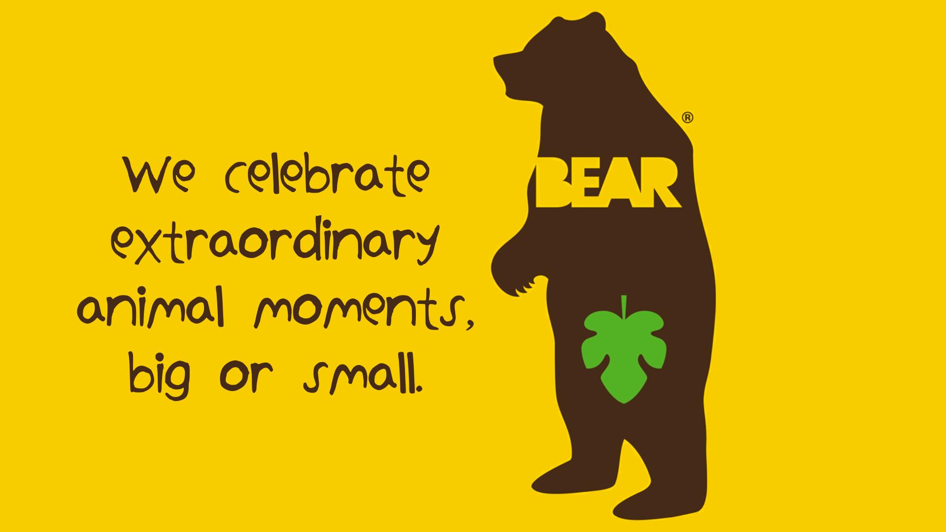 Bear Ideas 19th October 2016.014 Natalie Palmer Sutton | hand illustrated ideas for Bear Nibbles 40.jpeg