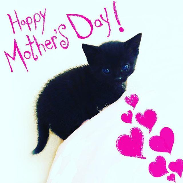 Happy Mother's Day! 💖💕💖💕💖💕💖💕💖💕💖💕💖 #cats #cat #neko #gato #pusica #mothersday #kitten #kittens#kittensofinstagram #catsofinstagram #ilovemycats #catlover #catlovers #crazycatlady #highschool #cute #teachers #blackcat #ilovemycat #blackcatsofinstagram #happymothersday