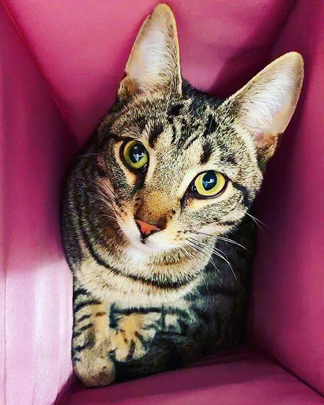 Happy Sunday! 💕🐱💕🐱💕🐱💕🐱💕🐱💕🐱💕 #cat #cats #pusica #ilovemycats #neko #gato #kitten #catlover #catlovers #crazycatlady #teachers #middleschool #highschool #booklover #10thgrade #catsofinstagram #teachersofinstagram #teachersfollowteachers #catsandbooks #booksandcats #chat #cute #middleschoolenglish #middleschoolcounselor