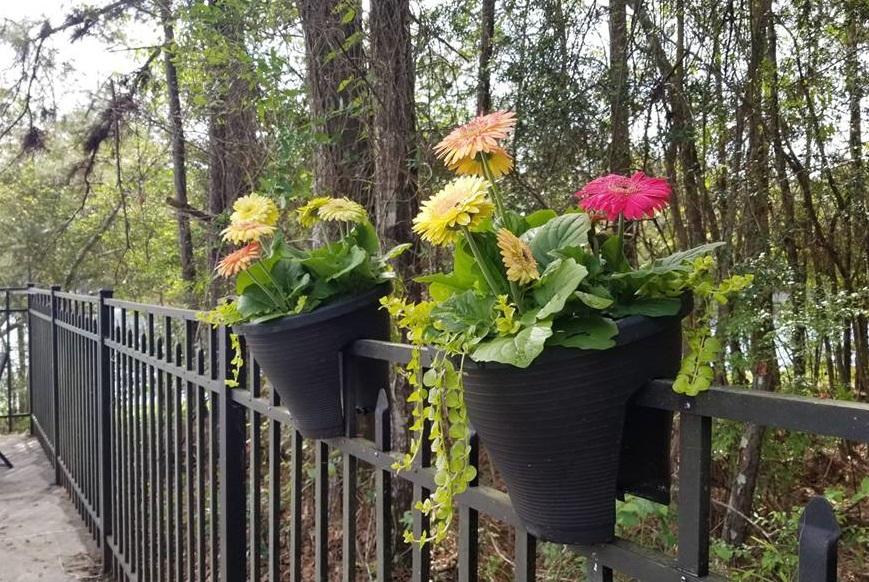 flowers on rail.jpg