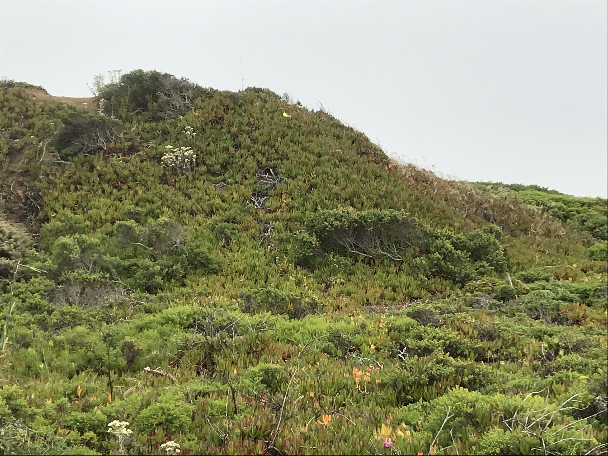 A view at Headlands from a recent hike outside my studio on a foggy day.