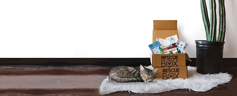 slider-cat.jpg