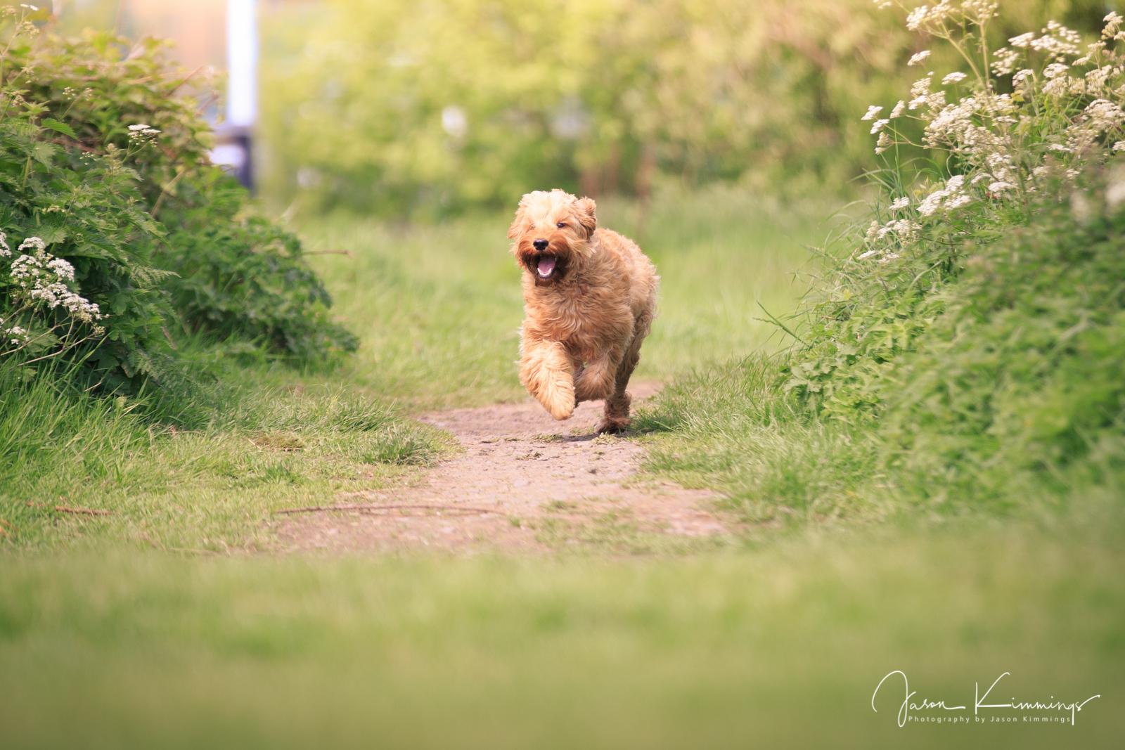 Dog-pet-photography-edinburgh-glasgow-west-lothian-1.jpg