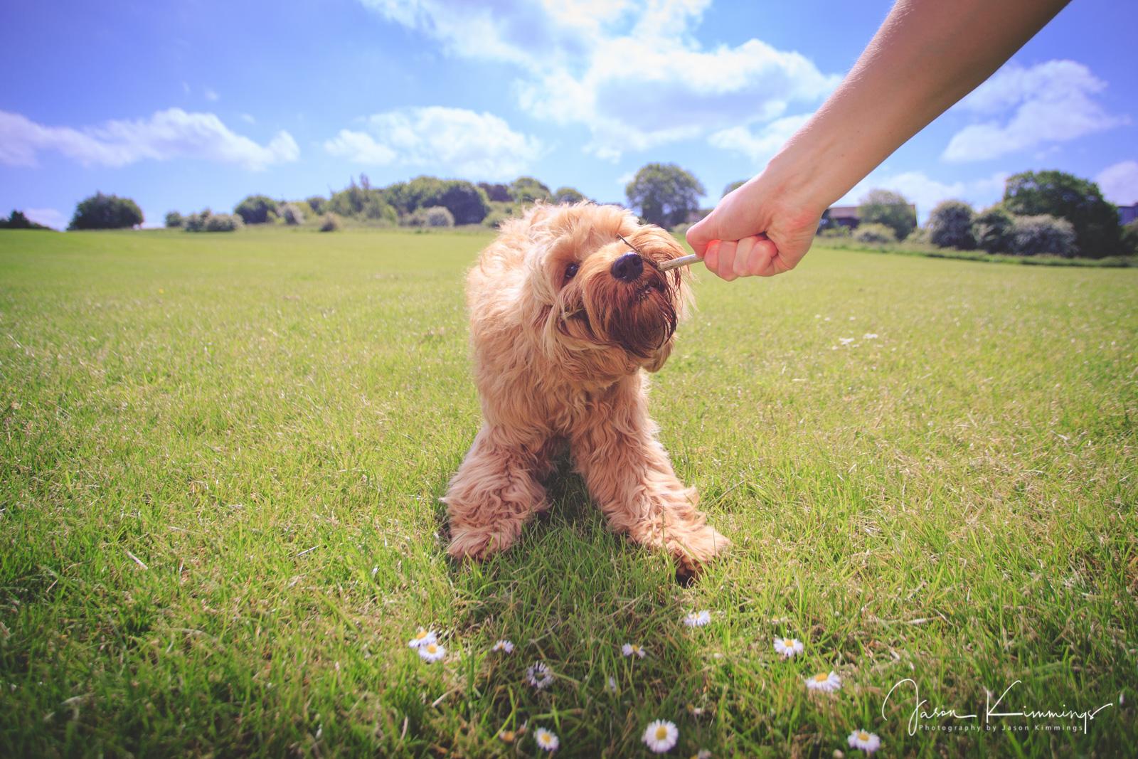 Dog-pet-photography-edinburgh-glasgow-west-lothian-4.jpg