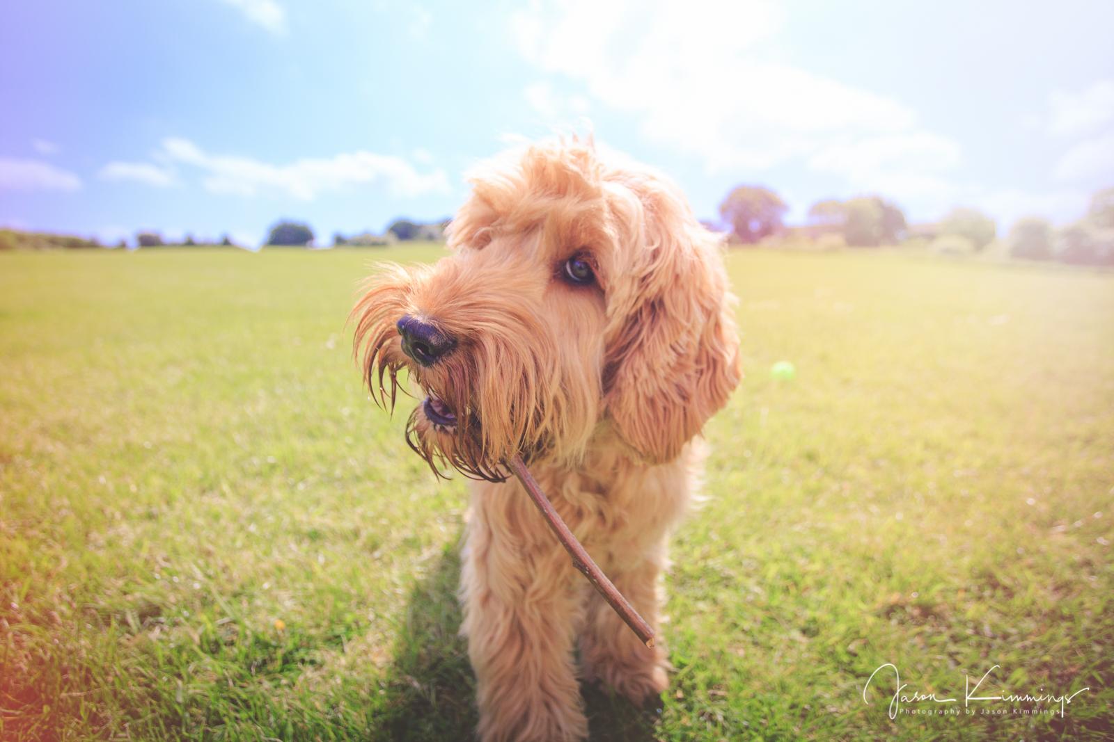 Dog-pet-photography-edinburgh-glasgow-west-lothian-3.jpg