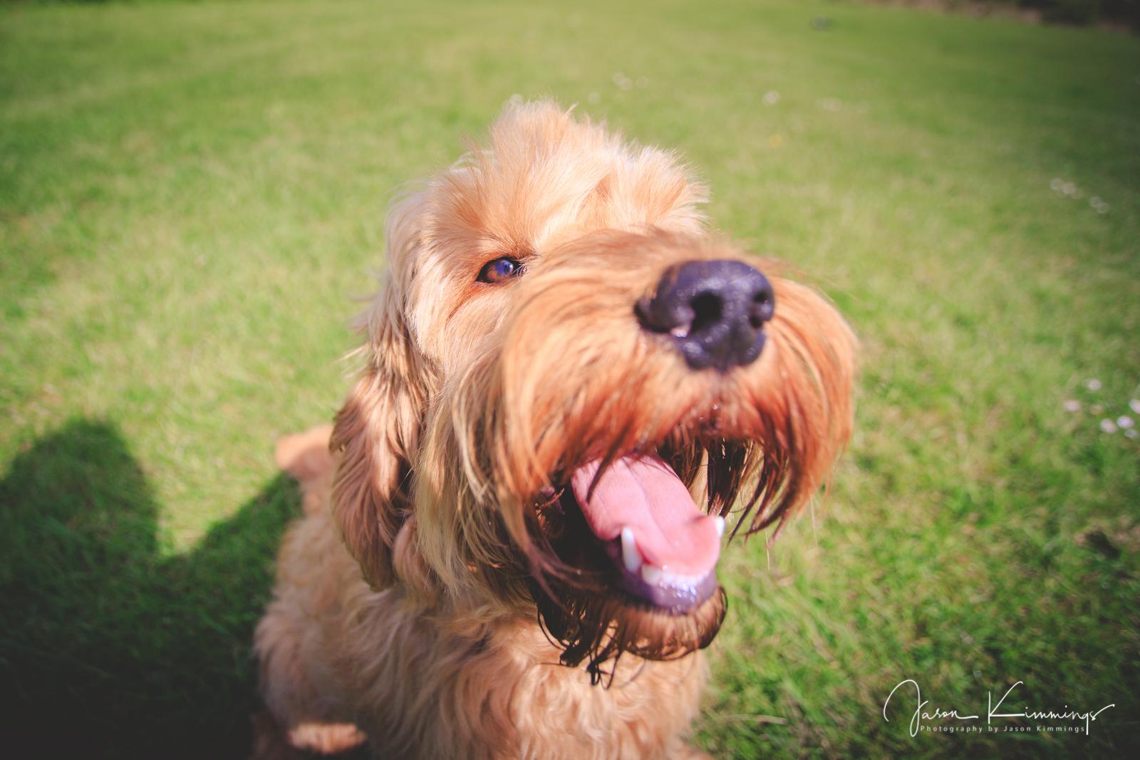 Dog-pet-photography-edinburgh-glasgow-west-lothian-5.jpg