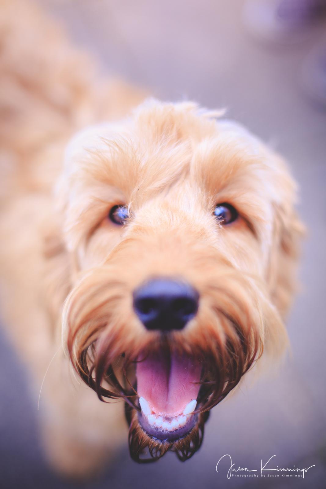Dog-pet-photography-edinburgh-glasgow-west-lothian-9.jpg