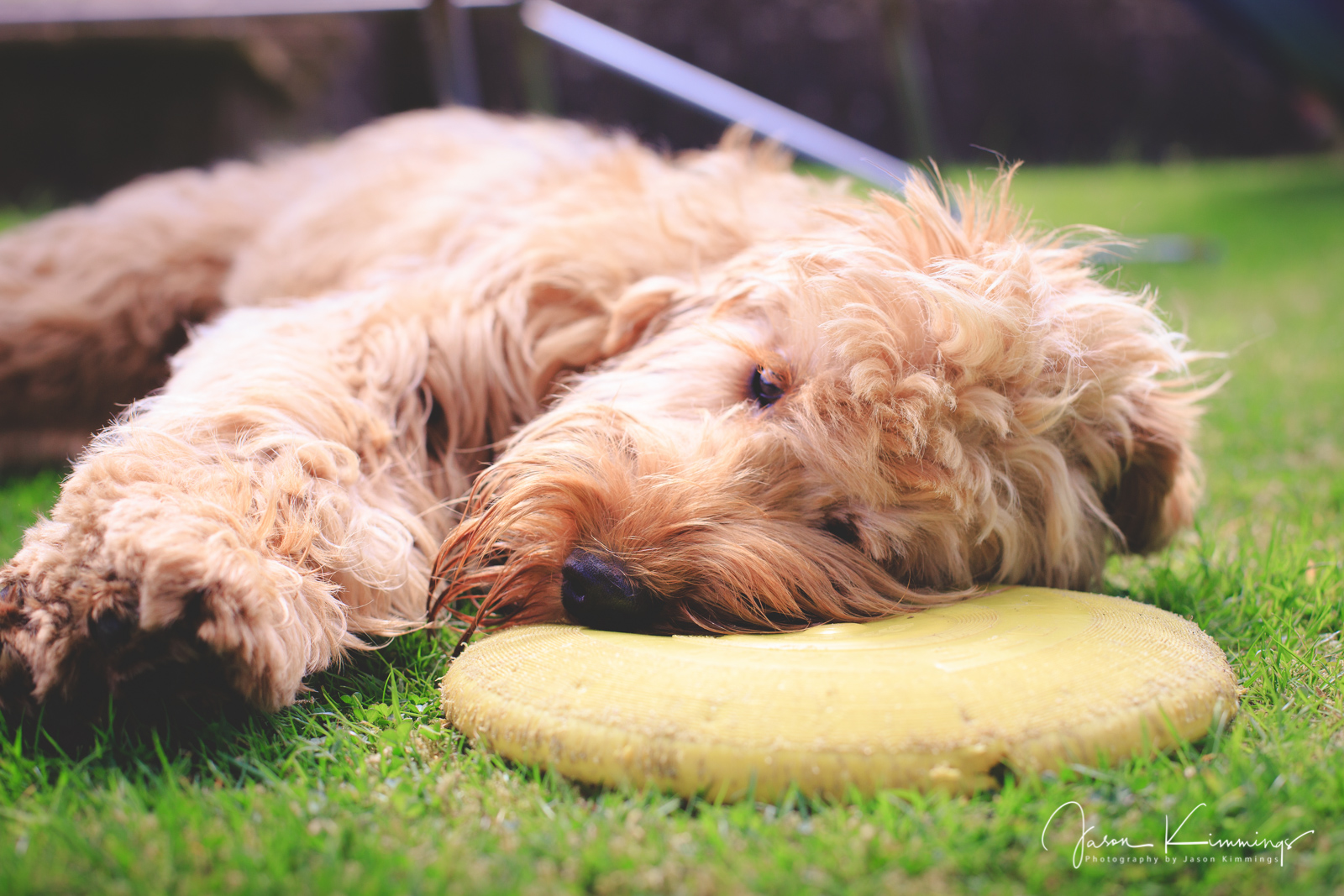 Dog-pet-photography-edinburgh-glasgow-west-lothian-11.jpg