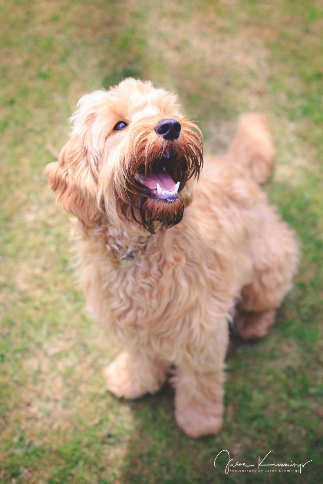 Dog-pet-photography-edinburgh-glasgow-west-lothian-10.jpg