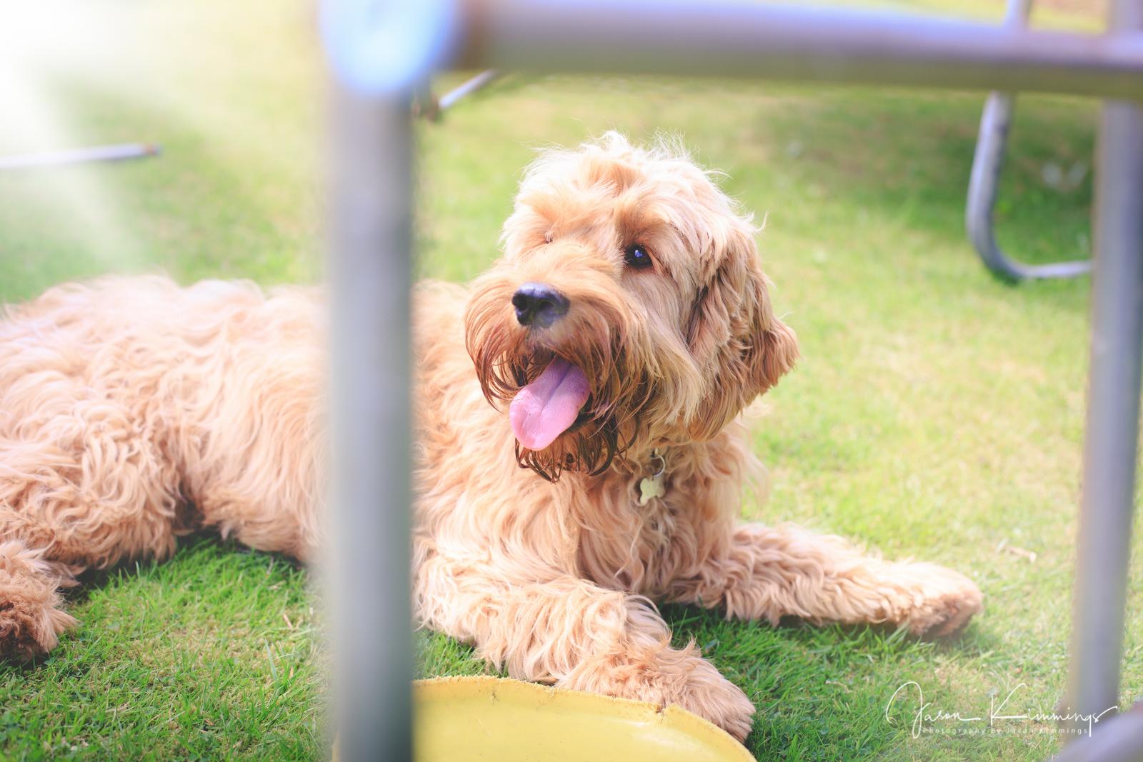 Dog-pet-photography-edinburgh-glasgow-west-lothian-12.jpg