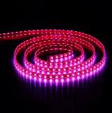 Cip Lighting7.png
