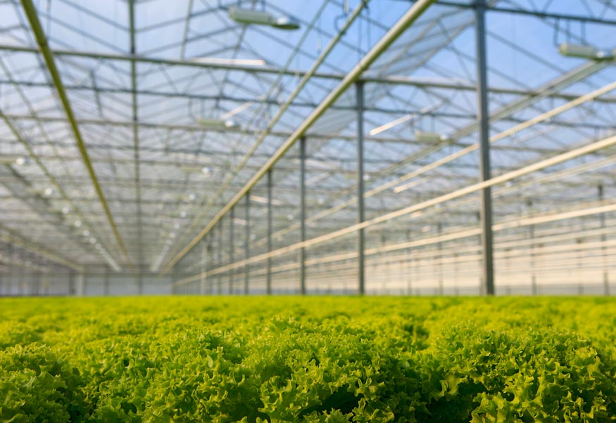 Photo: Blue Thumb Farms