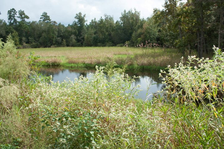 Ponds in open spaces