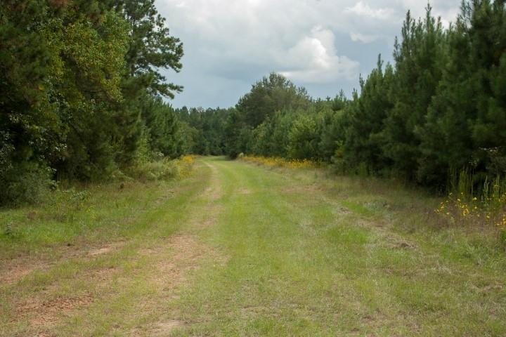 Multiple path trails